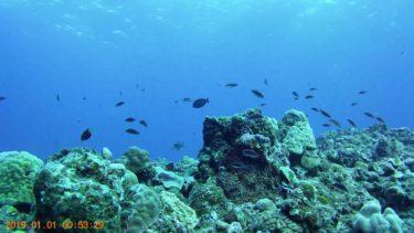 アクションカメラ「クロスツアーCT8500」を使ってダイビングで水中撮影してみました!