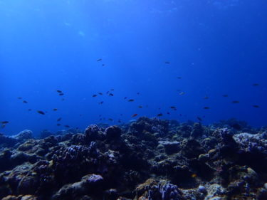 【OWダイバー旅行記】12月半ばに沖縄へ週末ダイビング一人旅