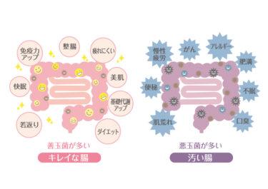 腸内フローラ検査キット比較一覧|自分の腸内環境を知ろう
