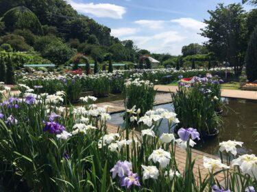 【あしかがフラワーパーク】6月は花菖蒲と紫陽花のブルー&ホワイトガーデン