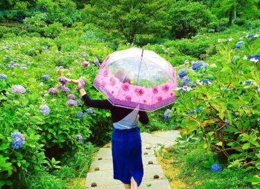 花柄・花モチーフの傘で雨でも華やか気分